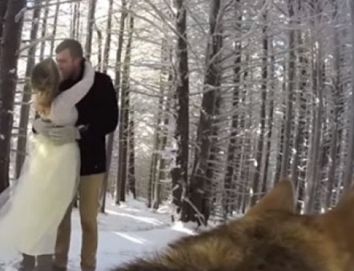 Σκύλος εκτελεί χρέη φωτογράφου σε γάμου